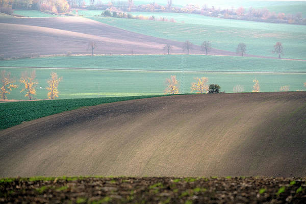South Art Print featuring the photograph Autumn In South Moravia 5 by Dubi Roman