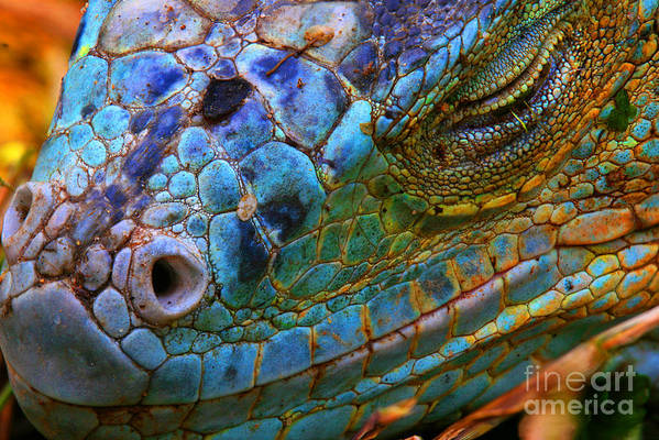 Dragon Art Print featuring the photograph Amazing Iguana Specimen Displaying A by Tessarthetegu