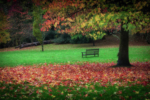 Bench Art Print featuring the photograph An Autumn Bench At Clyne Gardens by Leighton Collins