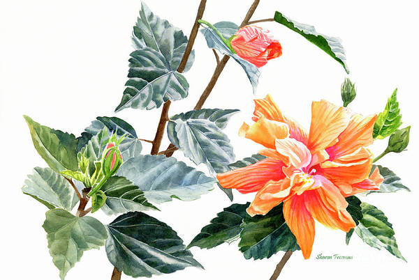 Double Orange Art Print featuring the painting Double Orange Hibiscus With Buds by Sharon Freeman