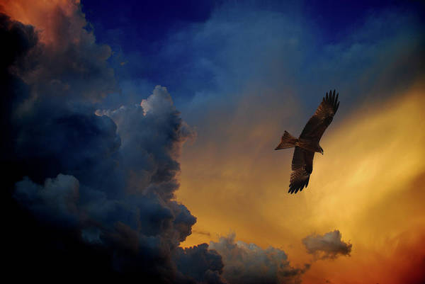 Animal Themes Art Print featuring the photograph Eagle Over The Top by Gopan G Nair