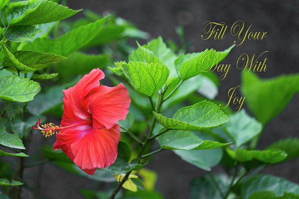 Hibiscus Art Print featuring the photograph Fill Your Day With Joy by Betsy Knapp