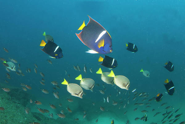 Latin America Art Print featuring the photograph Los Cabos Reefs by Luis Javier Sandoval
