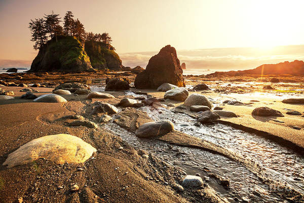 Olympic Art Print featuring the photograph Olympic National Park Landscapes by Galyna Andrushko