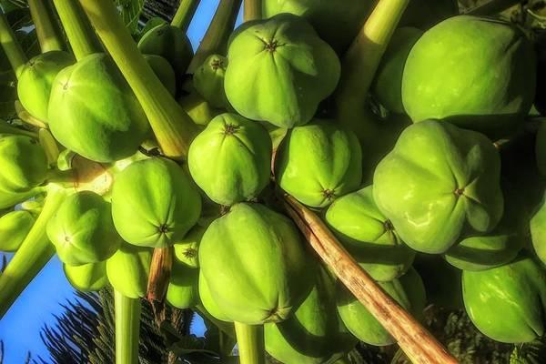 #papaya Art Print featuring the photograph Papaya by Cornelia DeDona