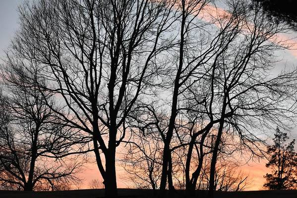 Trees Art Print featuring the photograph Pink Sky by Cassidy Marshall