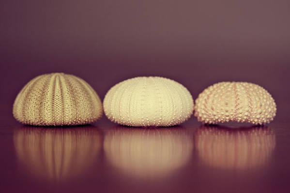 Sea Urchin Art Print featuring the photograph Sea Urchin Shell by Amelia Kay Photography