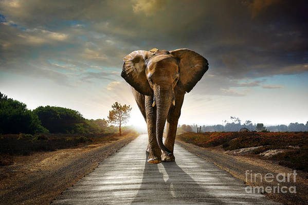 Big Art Print featuring the photograph Single Elephant Walking In A Road With by Carlos Caetano