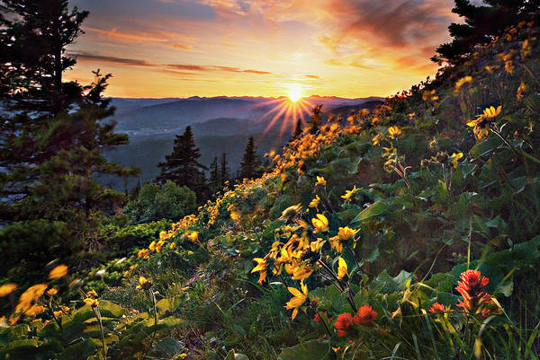 Balsamroot Art Print featuring the photograph Twilight Of The Balsamroot by John Christopher