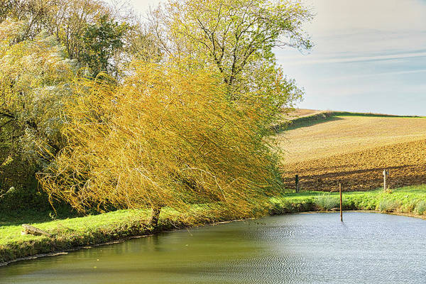 Wind Art Print featuring the photograph Wind In The Willow by Michael Briley