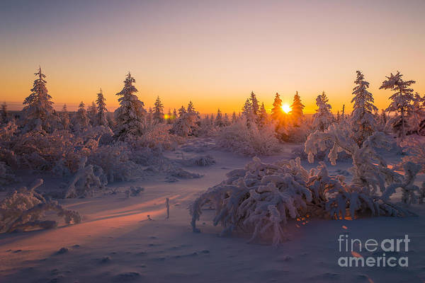 Country Art Print featuring the photograph Winter Landscape With Forest Trees by Oxana Gracheva