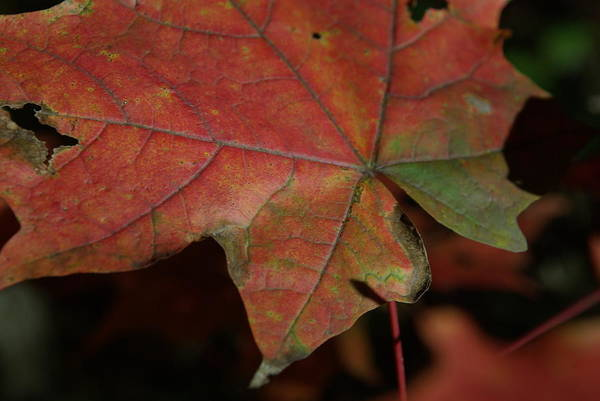 Fall Art Print featuring the photograph Fall Leaves 1 by Eric Workman