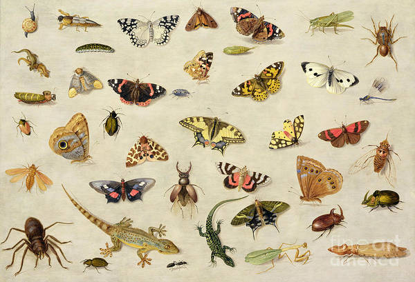Collection Art Print featuring the painting A Study Of Insects by Jan Van Kessel