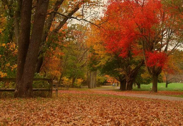 Autumn Art Print featuring the photograph A Walk In Autumn - Holmdel Park by Angie Tirado