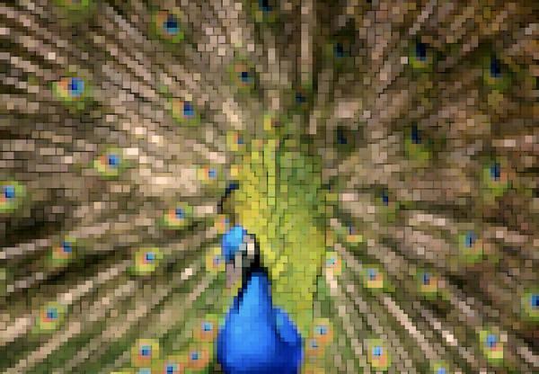 Peafowl Digital Painting Art Print featuring the painting Abstract Peacock Digital Artwork by Georgeta Blanaru