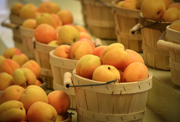 Baskets Of Apricots Art Print featuring the photograph Baskets Of Apricots by Julie Palencia