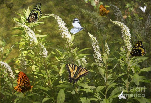 Butterflies Art Print featuring the photograph Butterflies In Golden Garden by Belinda Greb