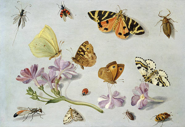 Still Life Art Print featuring the painting Butterflies by Jan Van Kessel