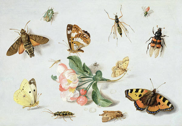 Butterfly Art Print featuring the painting Butterflies Moths And Other Insects With A Sprig Of Apple Blossom by Jan Van Kessel