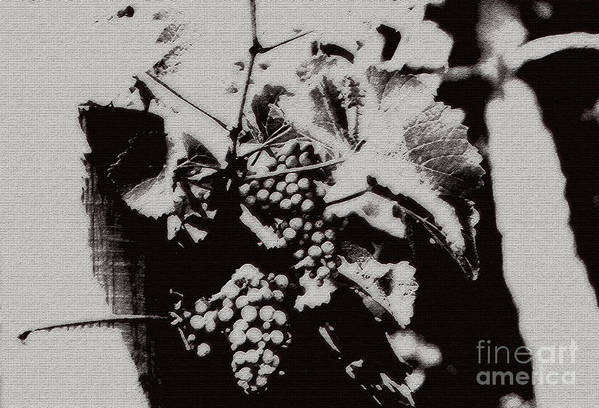 Grape Art Print featuring the photograph California Vineyard by Linda Shafer