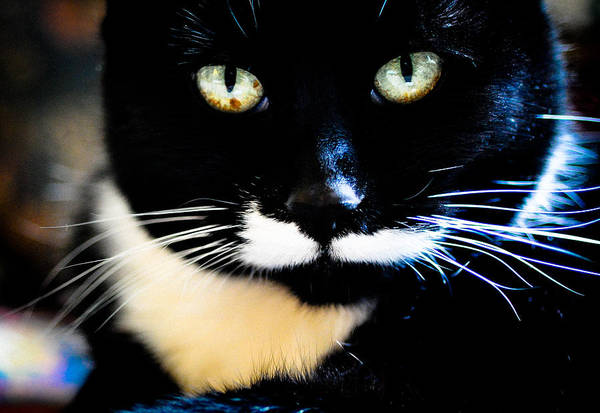 Cat Art Print featuring the photograph Cats Eyes by Ronda Broatch