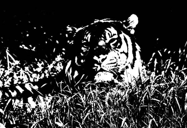 Tiger Art Print featuring the photograph Danger In The Shadows by Myrna Bradshaw