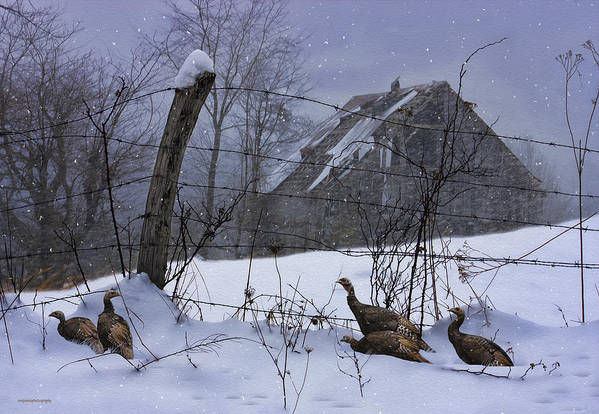 Ron Jones Art Print featuring the photograph Home Through The Snow by Ron Jones