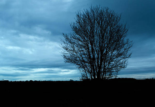 Aging Art Print featuring the photograph Lone Tree At Dusk by Fizzy Image