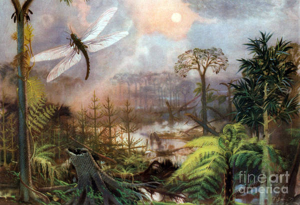 Flora Art Print featuring the photograph Meganeura In Upper Carboniferous by Science Source