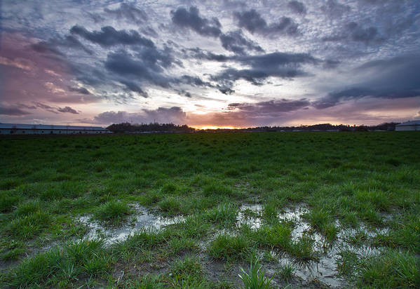 Swamp Art Print featuring the photograph Sunset In The Swamp by Eti Reid