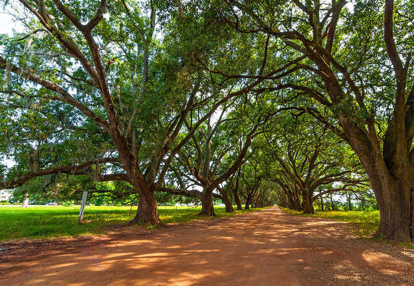 Evergreen Plantation Art Print featuring the photograph The Southern Way by Steve Harrington