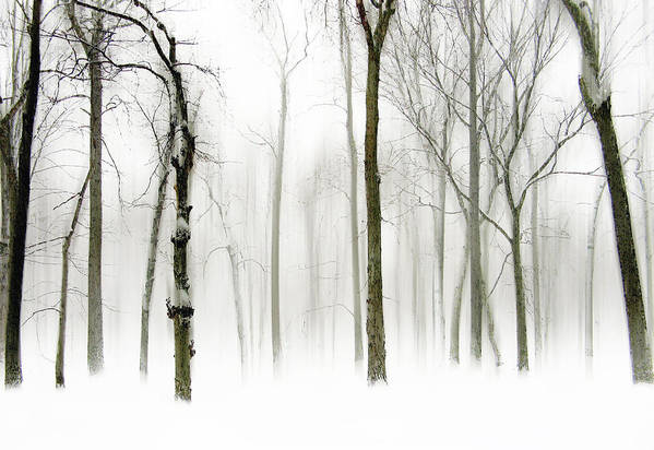Winter Art Print featuring the photograph Whiter Shade Of Pale by Jessica Jenney