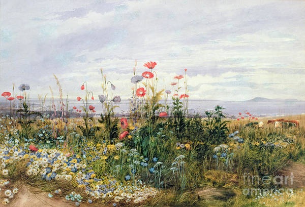 Meadow; Flowers; Irish; Wild; Landscape; Poppies Art Print featuring the painting Wildflowers With A View Of Dublin Dunleary by A Nicholl