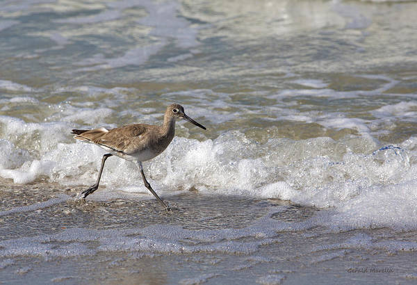Willet Art Print featuring the photograph Willet Running Through Surf by Gerald Marella