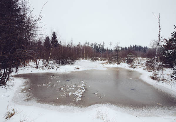 Winter Art Print featuring the photograph Winter Landscape With Trees And Frozen Pond by Matthias Hauser