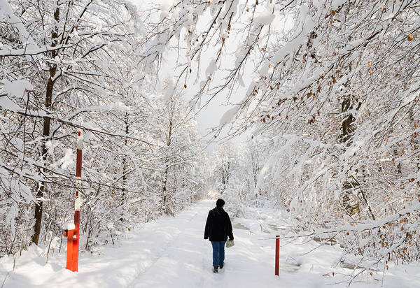 Winter Art Print featuring the photograph Winterly Forest With Snow Covered Trees by Matthias Hauser