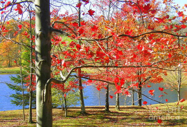 Autumn Art Print featuring the photograph Autum Colors by Sherry Dulaney