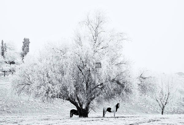 Horses Art Print featuring the photograph Beneath A Frosty Canopy by Mike Dawson