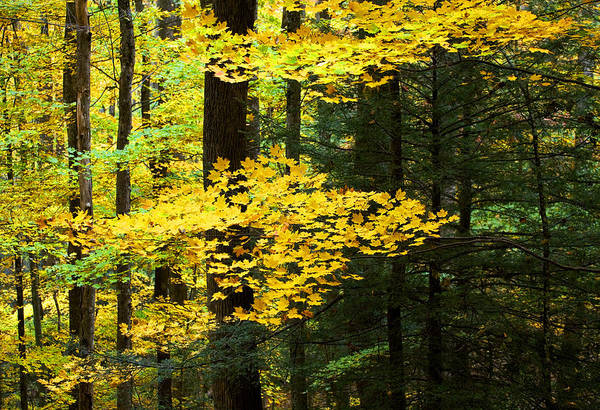 Fall Color Art Print featuring the photograph Getting Ready by Rich Franco