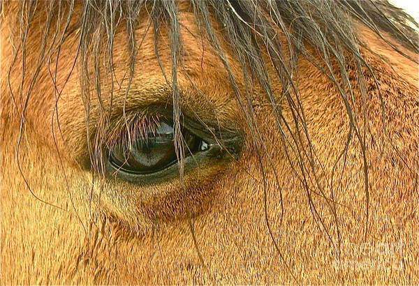 Horse Art Print featuring the photograph Looking At You Looking At Me by Tonia Antilla