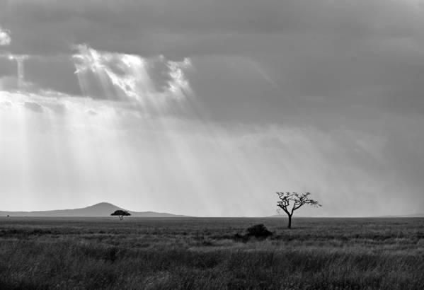 Serengeti National Park Art Print featuring the photograph Serengeti Sunlight by Nian Chen