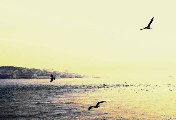 Landscapes Art Print featuring the photograph Yellow by Nuno Lorador Pires