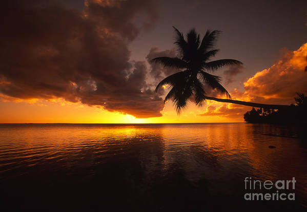 Bent Art Print featuring the photograph Bending Palm by Ron Dahlquist - Printscapes