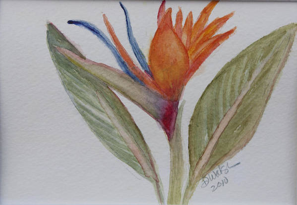 Bird Of Paradise Art Print featuring the painting Bird Of Paradise by Donna Walsh