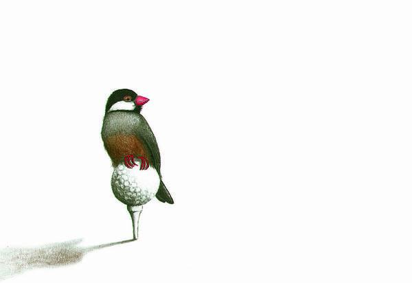 Birdie by Don McMahon