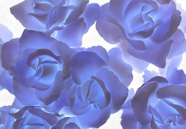 Blue Art Print featuring the photograph Blue Roses by Tom Reynen