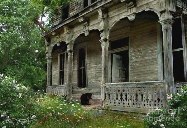 Haunted House Art Print featuring the photograph Cat House 2 by Tom Straub
