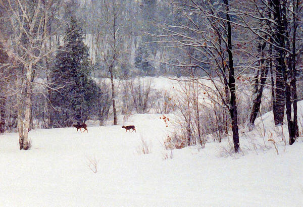 Snow Art Print featuring the digital art Deer By The Forest Db by Lyle Crump