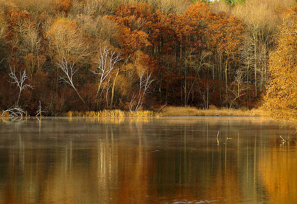 Lake Art Print featuring the photograph Fall Cove by Thomas Young