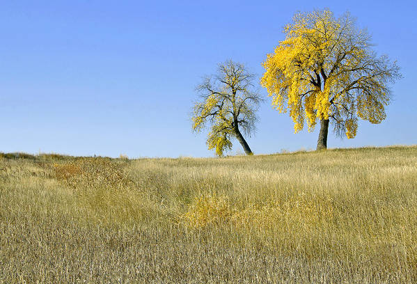 Fall. Blue. Sky. Weeds. Yellow. Grass. Fields. Water. Rain. Clouds.fall Colors Photography. Mixed Media. Mixed Media Photography. Mixed Media Fall Colors. Fine Art Fall Colors. Colorado Fall Colors. Fall Greeting Cards. Yellow Fall Color Photography. Fall Colors In Fort Collins Co. Gallery Fine Art Photography. Fall Landscape Photography. Art Print featuring the photograph Fall Days In Fort Collins Co by James Steele